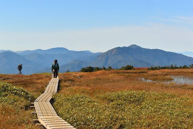苗場山 山頂の木道を歩く登山者