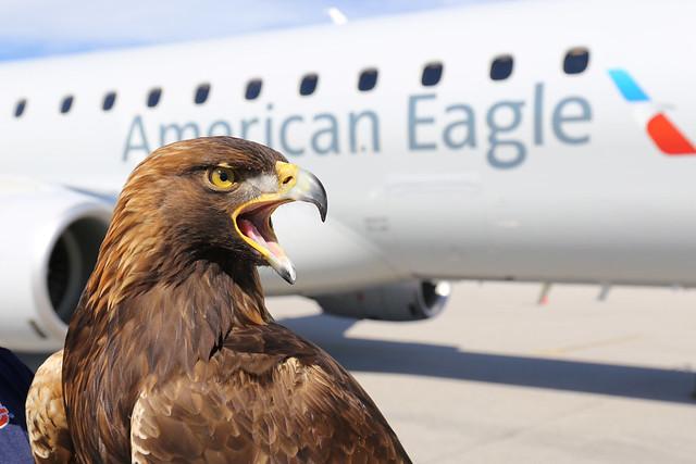 Auburn's eagle Nova in front of an American Eagle jet