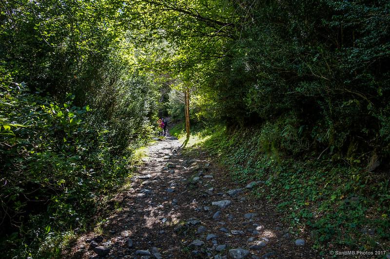 Por el bosque de la umbría del valle de Sant Nicolau en la Ruta de la Nutria