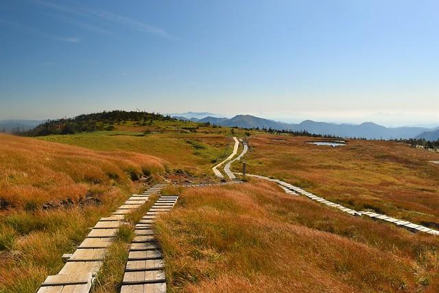 苗場山山頂の木道路