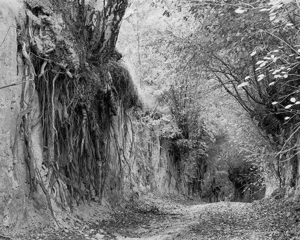 Forest gorge | by fotoswietokrzyskie