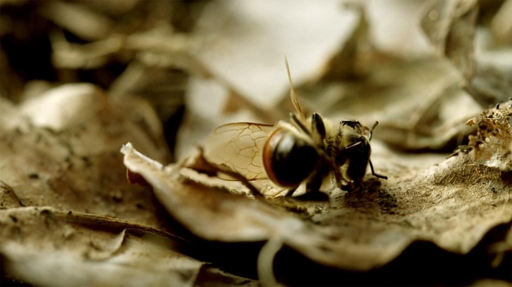 《蜂狂2》劇照1