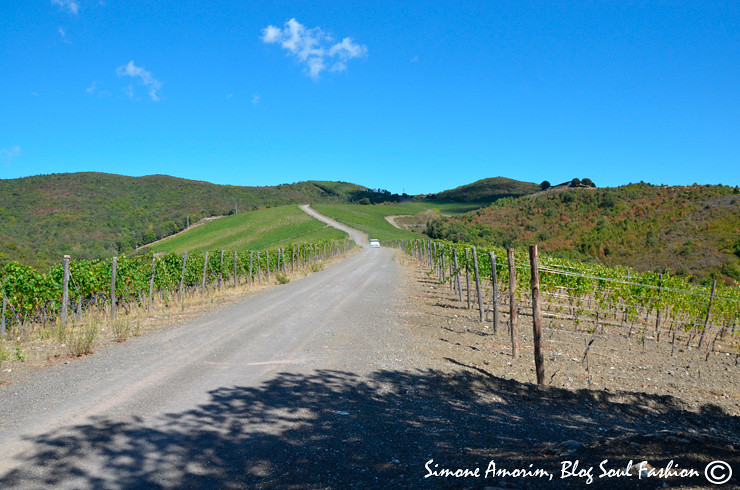 Castigiano de Bosco winery: a dream place! Don