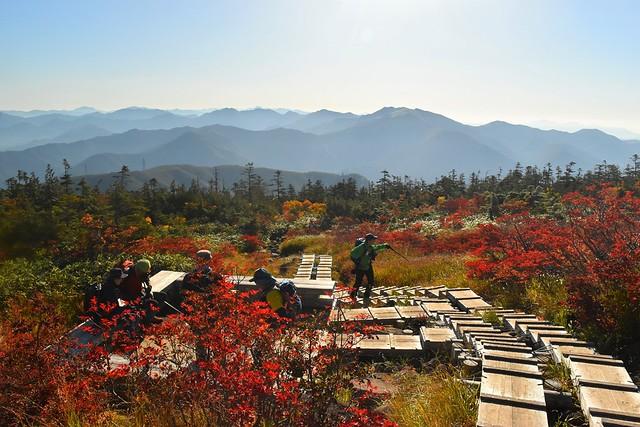 苗場山登山 中ノ芝の木道と紅葉