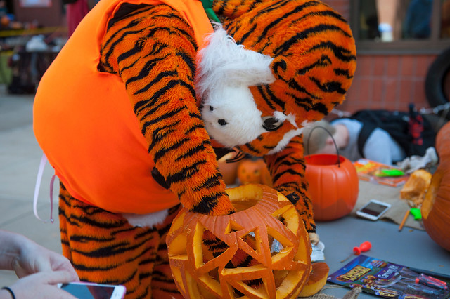 Aubie at Pumpkin Carve