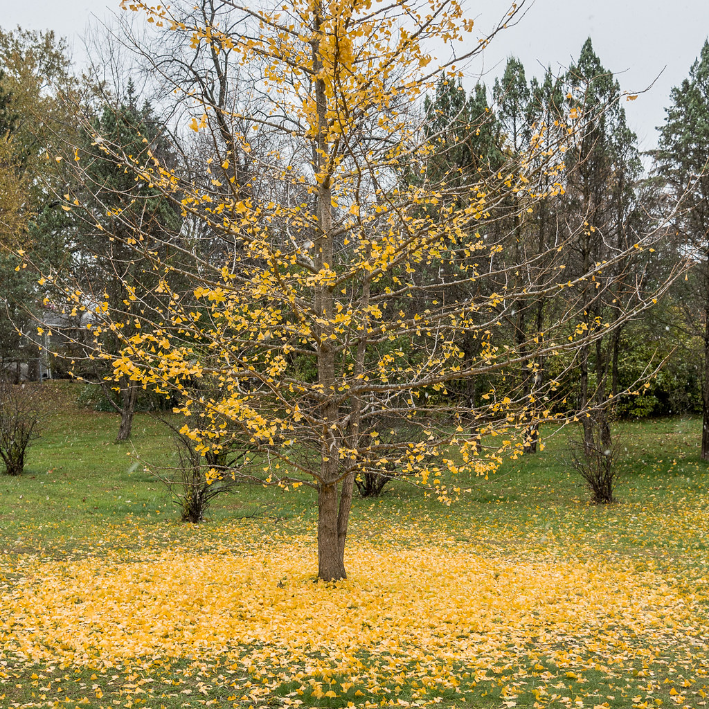 fall has fallen explore 470 thanks it dipped below f flickr rh flickr com