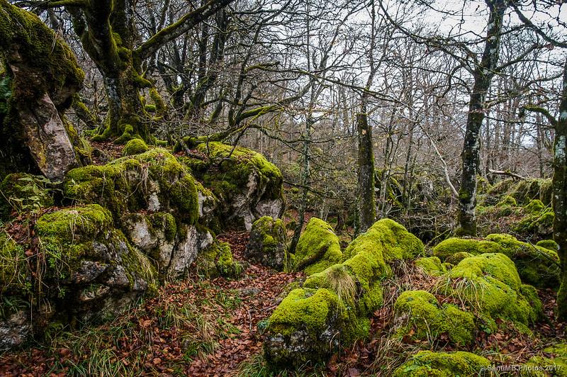 Entrando en el Bosque Encantado de Urbasa
