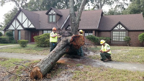 Urban Forest Strike Team Members assessing and recording tree damage from Hurricane Mathew