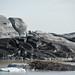 Ice Blocks & Ashes - Iceland