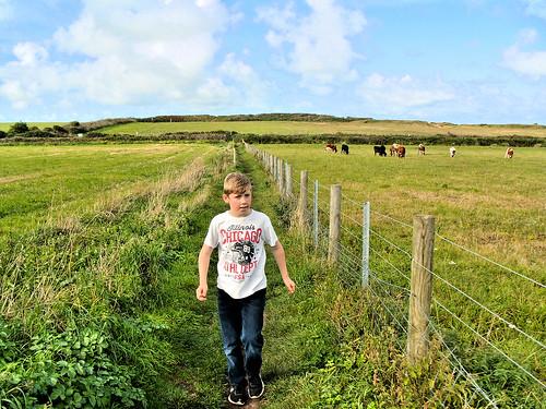 A shortcut across pastureland