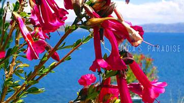 flora luquina
