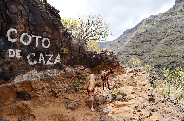 Hunting area, Anaga,Tenerife