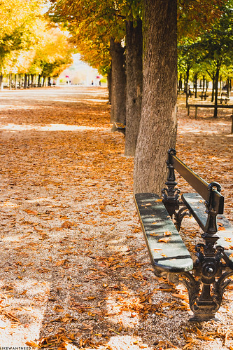 Bench, Jardin du Luxembourg | by like / want / need