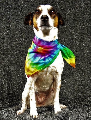 Mia tie dye dog clothing | by tiedupanddyed