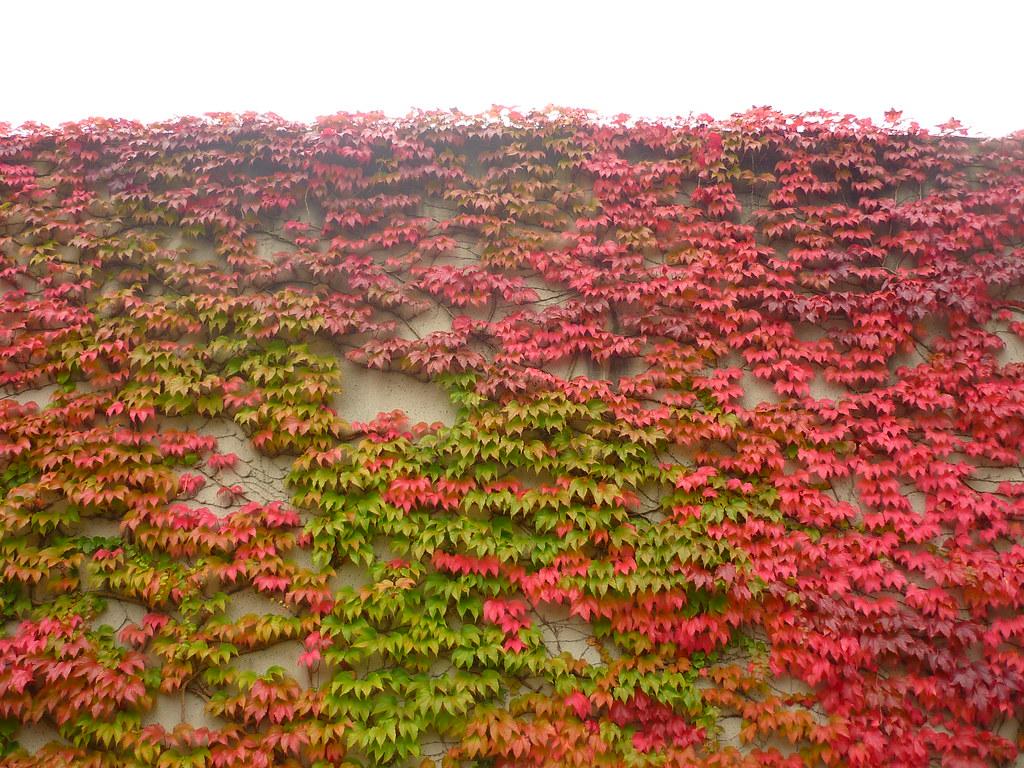 Wandbegrünung wandbegrünung jörg kaspari flickr
