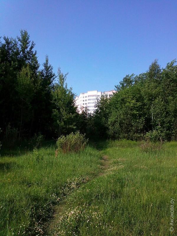 Березовая роща на Аксакова. Проблемы озеленения Восточного жилого района