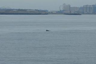 圖片來源:中華鯨豚協會提供。