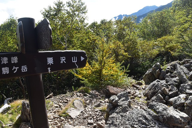 仙水峠から栗沢山へ