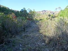 Sur le chemin en RD de la Figa Bona : la partie vers la traversée de la Figa Bona