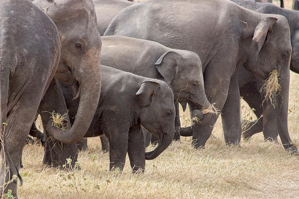 野外大象族群。圖片來源:AlGraChe。