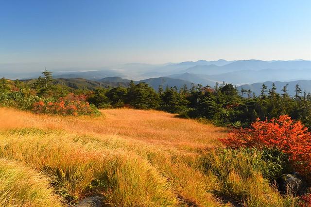 苗場山登山 中ノ芝の草紅葉