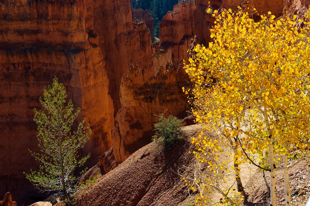 Autumn on Navajo Trail, Bryce Canyon National Park, October 7, 2015