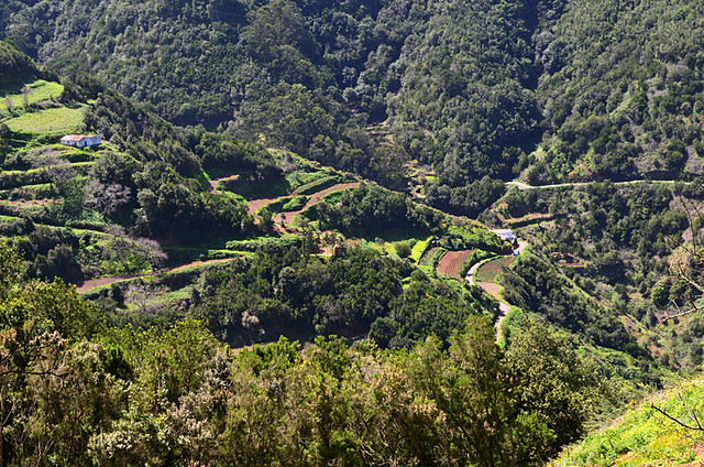 Terraces and forest, Anaga, Tenerife