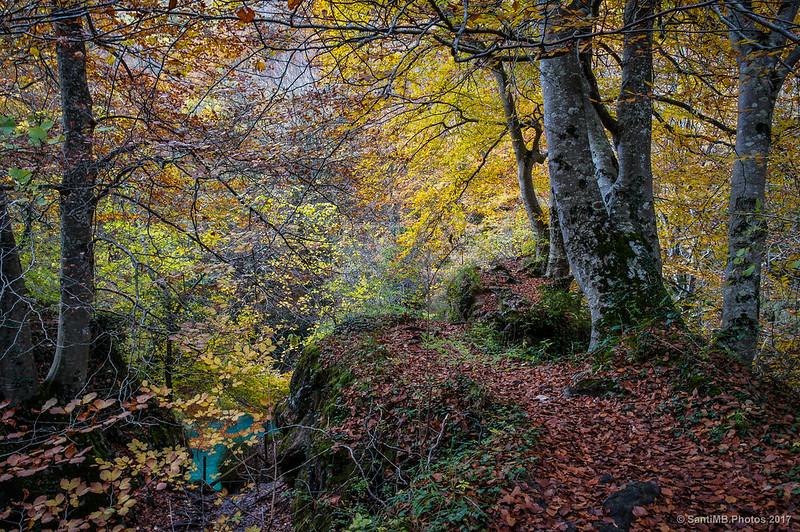 Colores de otoño por el Nacedero del Urederra