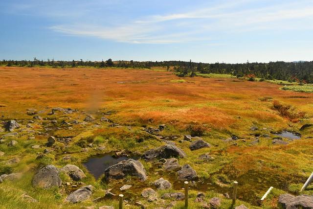 苗場山神社裏の広大な湿原