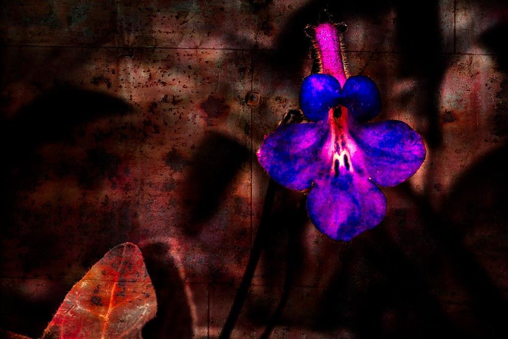 Orchidelirium: Neon & Rust