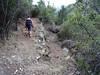 Le chemin du Carciara en RG de la Figa Bona au retour :  l'embranchement du sentier annexe (photo vers l'aval)