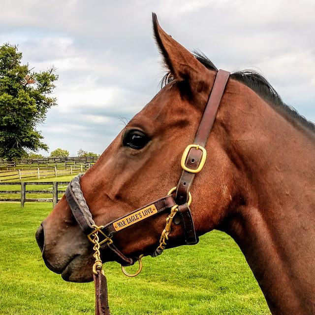 The horse, War Eagle's Love.