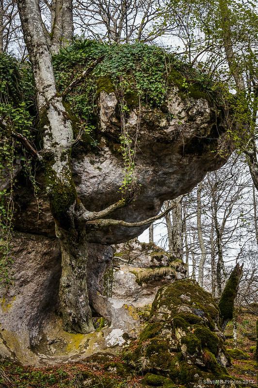 Árbol atravesando una roca en el Bosque Encantado de Urbasa