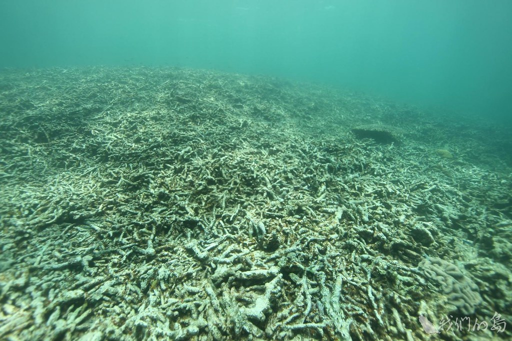933-2-3  1998年,全球發生聖嬰現象,東沙環礁內的海水溫度上升,導致珊瑚大規模白化死亡,