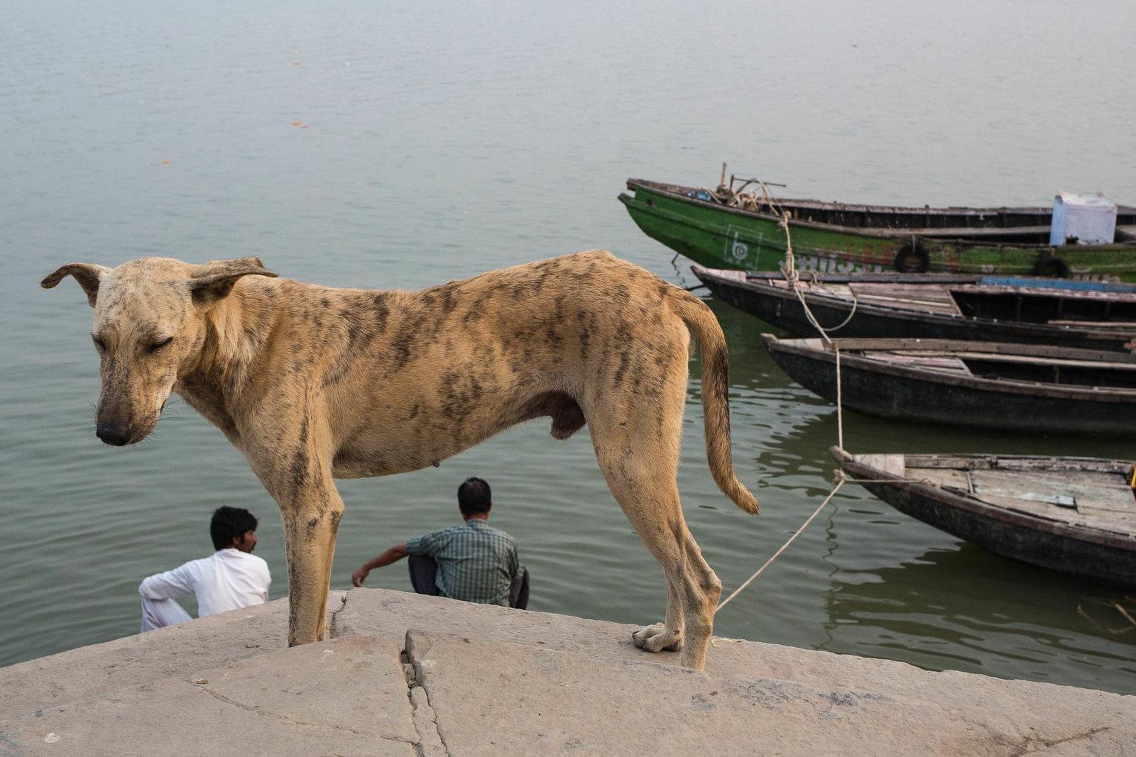 Varanasi, 2017 | by d.vanderperre