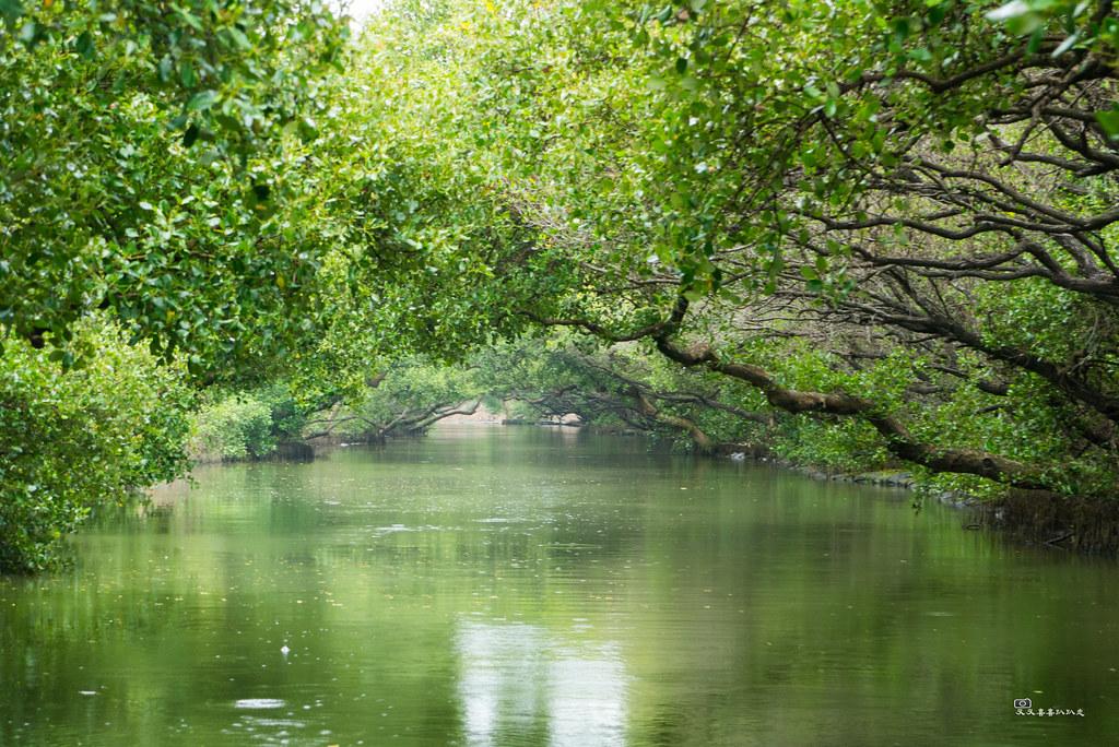 台江國家公園 綠色隊道。Chester(CC BY-SA 2.0)