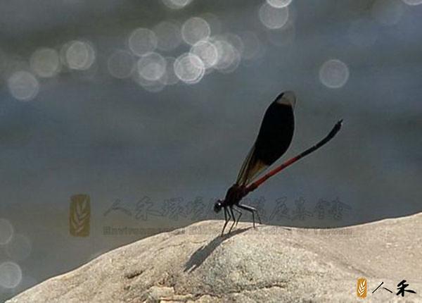 6_有經驗的釣客只要觀察石頭上刮食的痕跡,就可判斷此處的魚種及數量。(圖片來源:人禾)