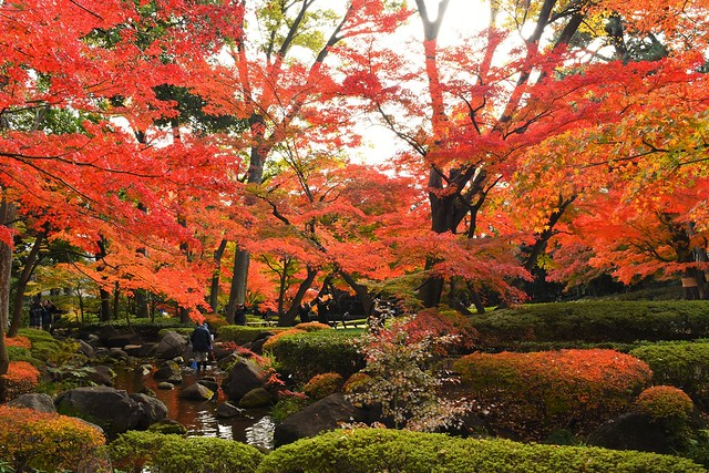 大田黒公園の紅葉風景