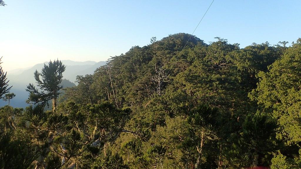 從台灣杉二姐身上眺望遠處的扁柏支點與水平纜繩。圖片來源:楊嘉君。