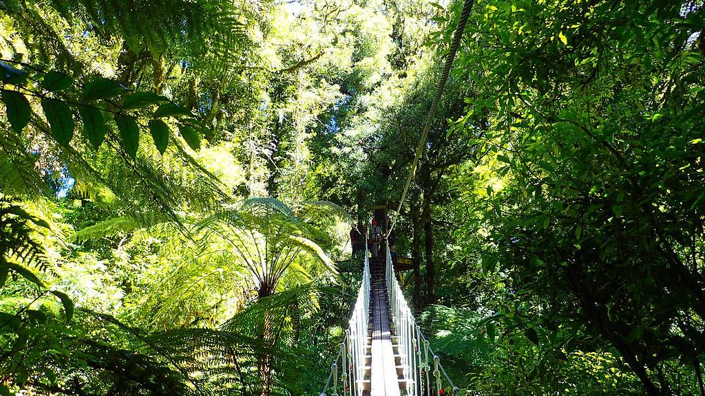 體驗路線裡還包含2個樹冠層吊橋,其中一個長達50公尺,可以盡情觀察原始林樹冠層裡的動植物