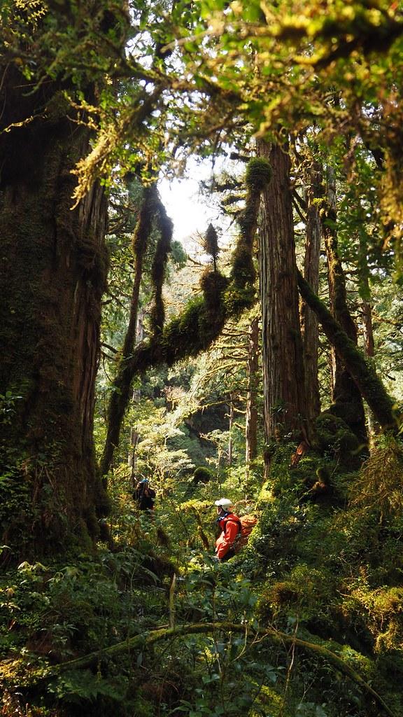 待在這樣的森林裡覺得太幸福了,有時都覺得我們似乎不配擁有這樣的山林。圖片來源:楊嘉君。