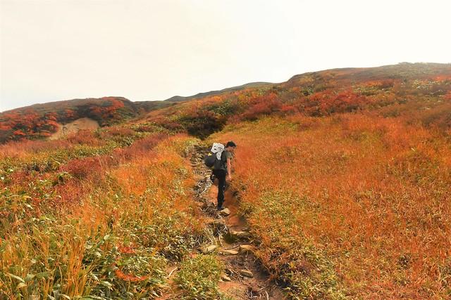 以東岳登山 草紅葉広がる直登コース