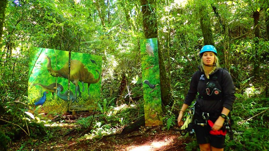 嚮導在森林裡介紹過去繁茂於紐西蘭目前已經絕種的特有種鳥類