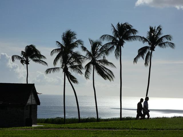 Silueta de palmeras en las islas del Caribe