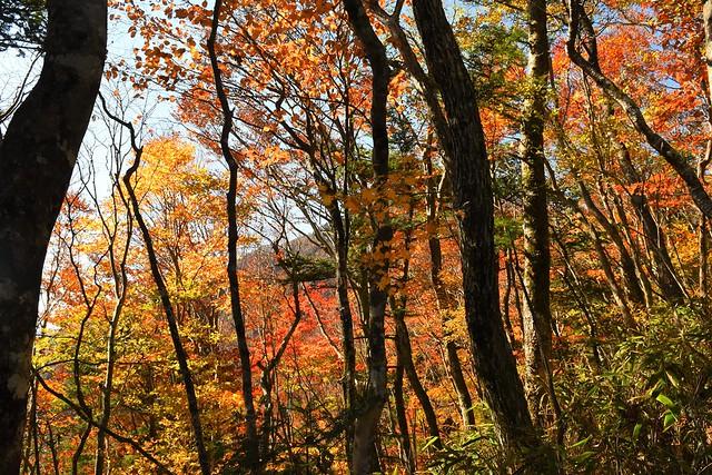 御正体山の紅葉風景