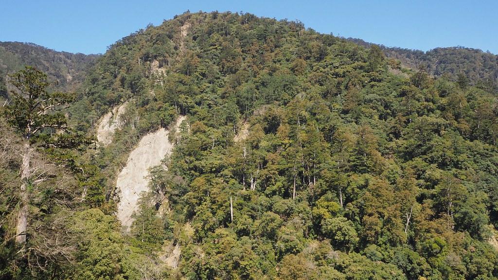 本野山探勘途中,團隊認為下次最值得再去探勘的區域,遠看可見許多高大的台灣杉。圖片來源:楊嘉君。