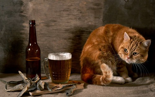 cat_beer_glass_observation_still_life_35303_3840x2400 | by fonin.ap