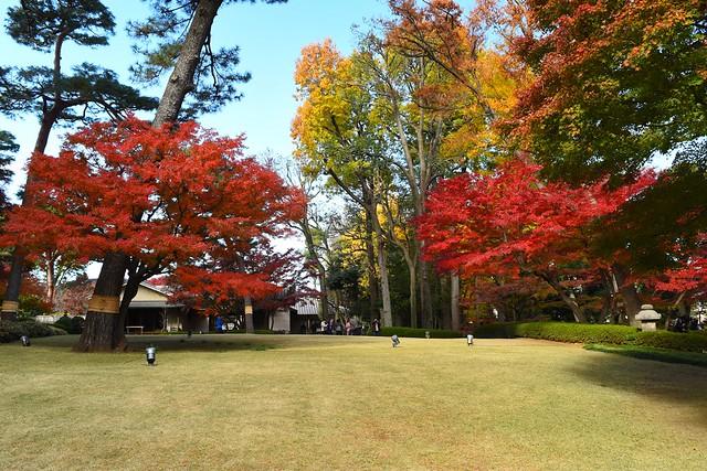 大田黒公園 芝生と紅葉