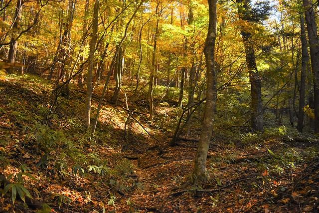 今倉山登山道の紅葉