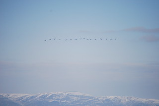 171106-migrating-geese-hanfordsite-snowcap | by zverina.com